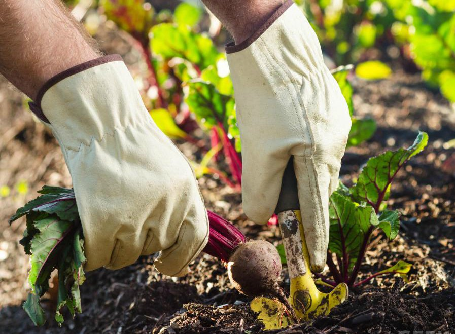 person-with-white-gloves-gardening