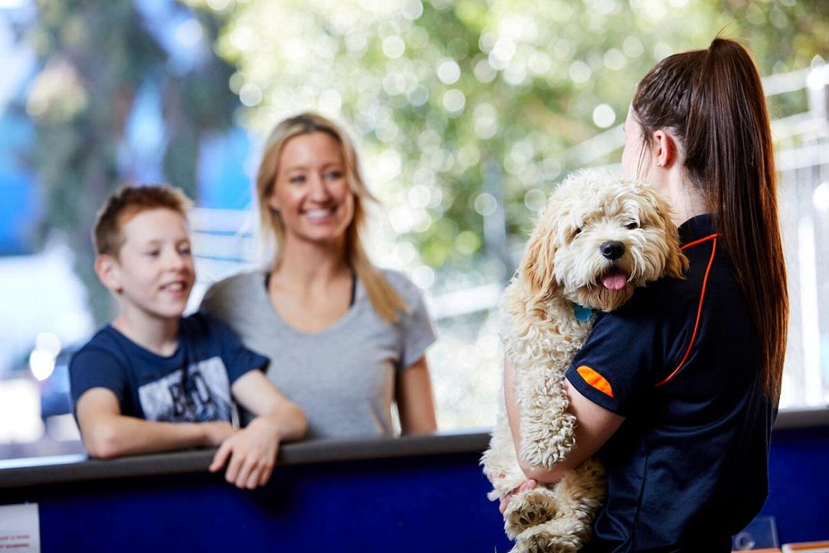 international pet transport Melbourne
