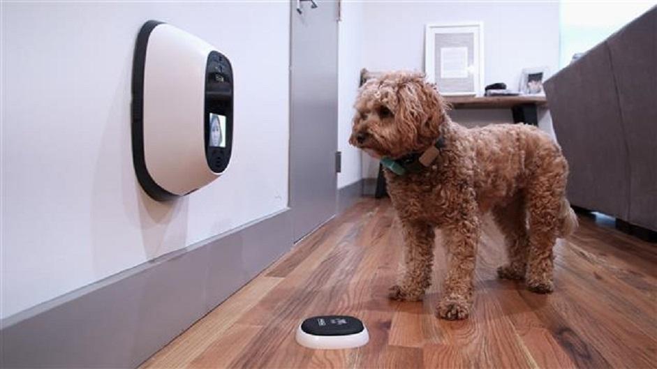 dog camera interaction