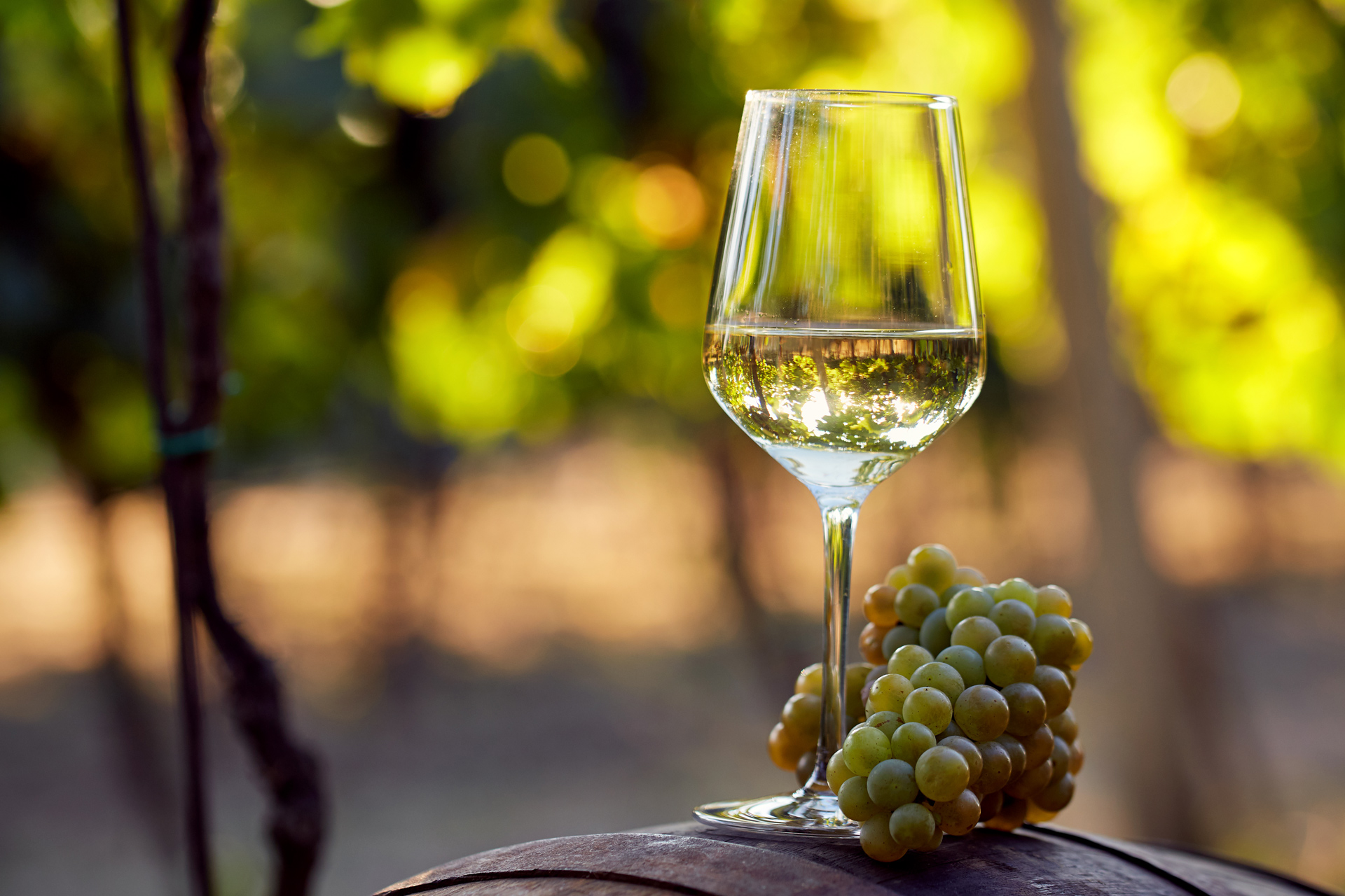 white wine on a wooden barrel