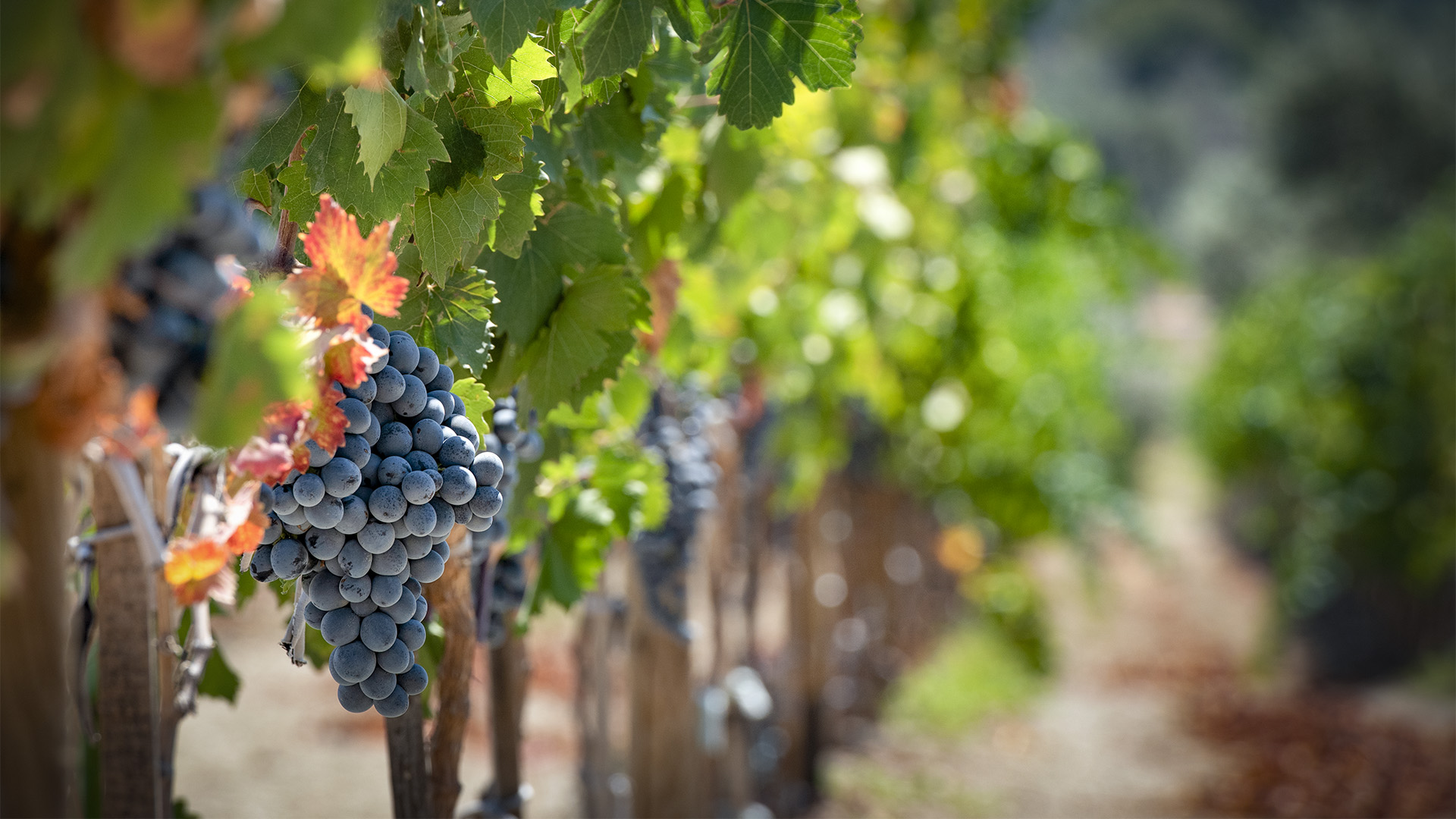 wine-routes-and-vineyards
