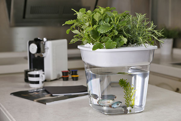 home mini aquaponic