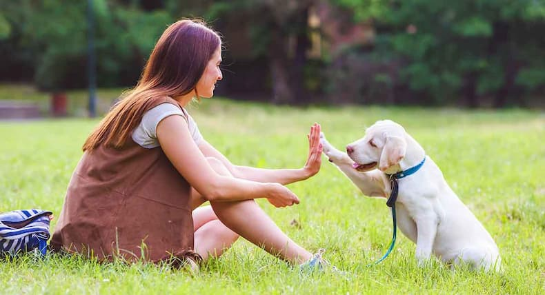 woman high fiving with a white dog
